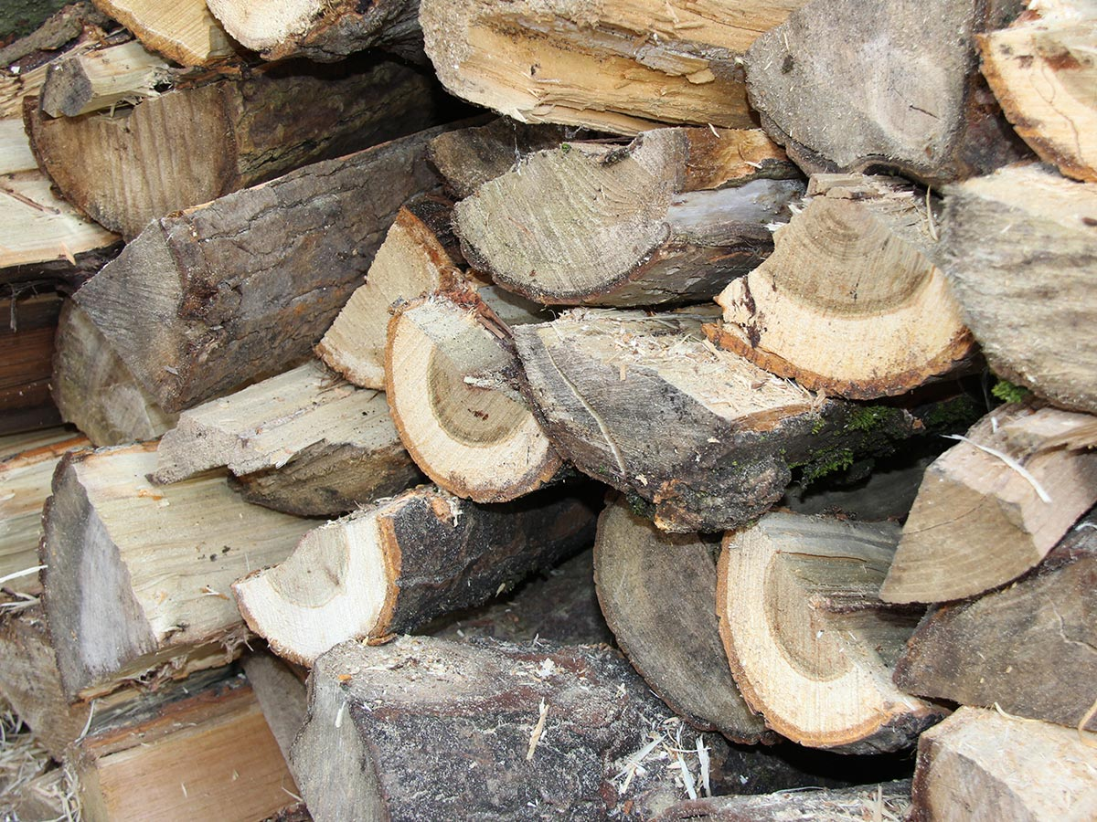 Semi Seasoned Hardwood Logs big